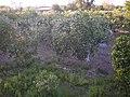 Babaocağı - panoramio.jpg
