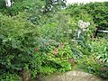 Back garden - Flickr - peganum (2).jpg