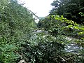 Banat, Nera Canyon - panoramio (26).jpg