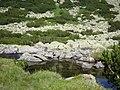 Bansko, Bulgaria - panoramio (21).jpg