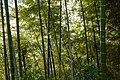 Batumi - Botanical Garden (9458284201).jpg