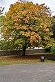 Baum Im Herbst, Phoenix Park Dublin (22483267721).jpg