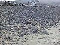 Bayocean shore 2020.jpg