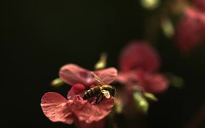 Файл:Bee in ultra slow motion.webm