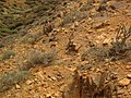 Betancuria, 35637, Las Palmas, Spain - panoramio (195).jpg