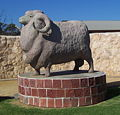 Big Ram in Karoonda.jpg