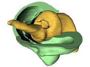 Trigonopterus - Image: Biological screw Trigonopterus
