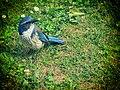 Bird (41325540).jpeg