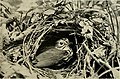 Bird lore (1919) (14747153361).jpg