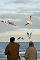 Birds and a couple (2059826795).jpg