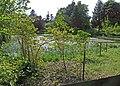 Birr Castle grounds - geograph.org.uk - 1364560.jpg