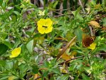 Black Point Wildlife Drive, Merritt Island FL - Flickr - Rusty Clark (210).jpg