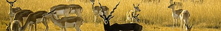 Blackbuck National Park banner.jpg