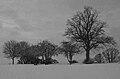 Bleak mid winter (6822401667).jpg