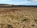 Bomb crater - geograph.org.uk - 1758920.jpg