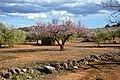 Bonic paisatge a les Planes, Torrelles de Foix. (40597688261).jpg