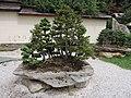 Bonsaimuseum Seeboden - Kärnten - panoramio (1).jpg