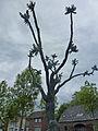 Boomfontein, Ommel - Charles Vergouwen (3).jpg