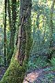 Bosque - Bertamirans - Rio Sar - 028.jpg