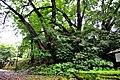Botanic garden limbe105.jpg