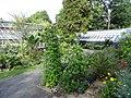 Botanischer Garten Gießen 07.JPG