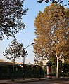 Boulevard Suchet automne, Paris 16e 3.jpg