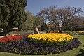 Bowral Tulip Festival - panoramio (4).jpg
