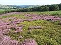Bradfield Moors near Emlin Dike - geograph.org.uk - 1449829.jpg