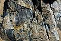 Breccia (Shatter Zone, Late Devonian; Sand Beach, Mt. Desert Island, Maine, USA) 2.jpg