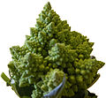 Broccoli DSCN4354 mod.jpg