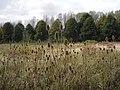 Broekpolder - Vlaardingen - 2009 - panoramio.jpg
