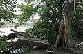 Broken branch (29973873425).jpg