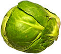 Brussels sprout 2.jpg
