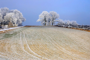 Breitenthal, Rhineland-Palatinate - The Jammerseiche in soft rime