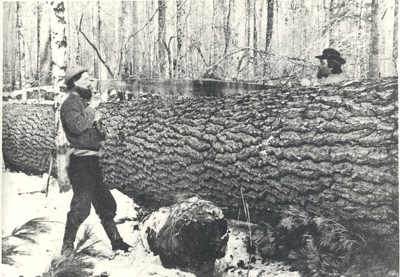 File:Bucking up a large white pine with a crosscut saw, circa 1890s (5188097294).jpg