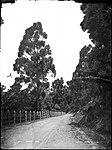 Bulli Pass (4903866958).jpg