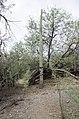Butcher Jones Trail to Pinter's Point Loop, Tonto National Park, Saguaro Lake, Ft. McDowell, AZ - panoramio (76).jpg