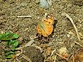 Butterfly 11 (1).jpg