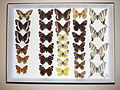 Butterfly collection.jpg
