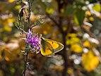 Butterfly in Jamaica Bay Wildlife Refuge (41144).jpg