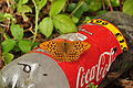 Butterfly on bottle at Shaugh Bridge (5143).jpg