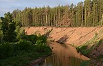 Pine stand on river in Buzuluksky Bor NP