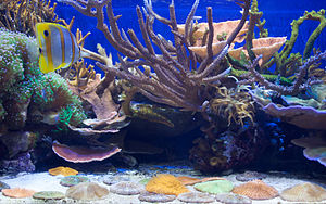 California Academy of Sciences - One of the smaller coral exhibits in the aquarium