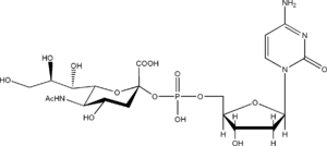 Nucleotide sugar - CMP-NeuNAc