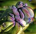 Cactus (8313238950).jpg
