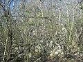 Calotmul (Yaxkukul), Yucatán (11).jpg