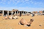 Camel market at Daraw in 2017, photo by Hatem moushir 22.jpg