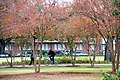 Campus (8227474865).jpg