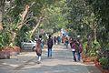 Campus Road - Jadavpur University - Kolkata 2015-01-08 2392.JPG