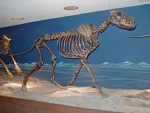 English: Skeleton of a dire wolf, Canis dirus,...